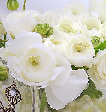 Immagini Fiori Bianchi.Ranunculus Ibrido A Fiori Bianchi Aviv White Floriana Bulbose