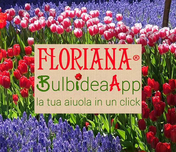 Bulbidea App